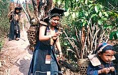 Trek au Nord, en pays Akha et Hmong