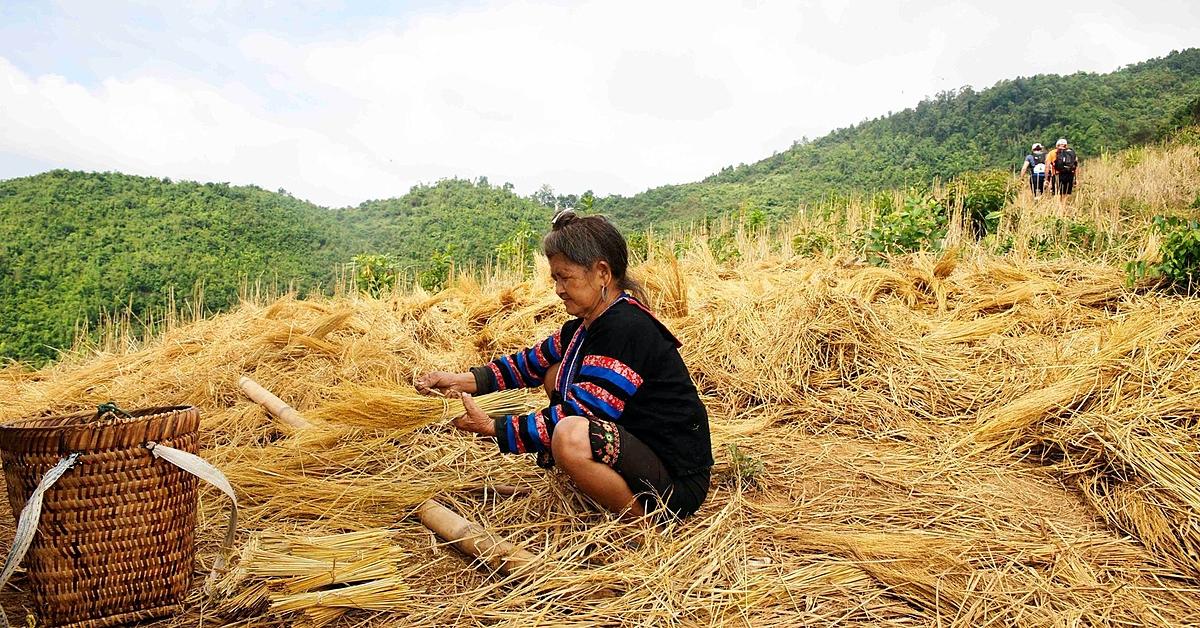 Voyage à pied Laos : La vie des ethnies du Nord, randonnées et rencontres