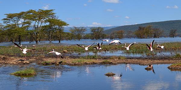 En el lago Nakuru
