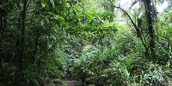 Paysage du centre de la Martinique