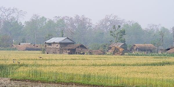 Village Tharu