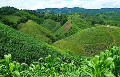 Le Nord montagneux et extension à Khao Sok Hors des sentiers battus