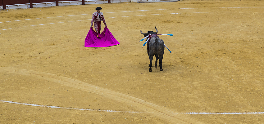 Matador et taureau