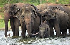 Dans le sillage des éléphants et des baleines bleues