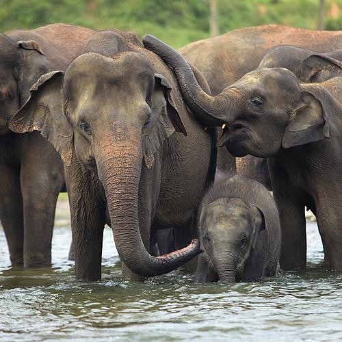 Dans le sillage des éléphants et des baleines bleues - Colombo -