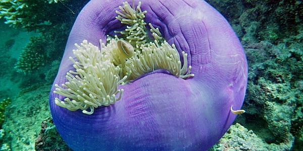 Fondos submarinos, Gran Barrera de Coral