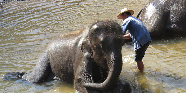 Le bain des éléphants, Thaïlande