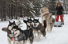 Multiactivités en famille, en Laponie