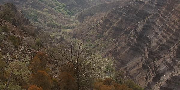 Forêt du Day