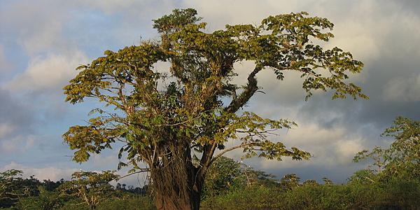 Paisaje de la Reserva Cuyabeno, Ecuador Amazonia