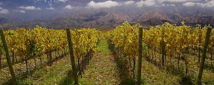 Weintäler und Anden