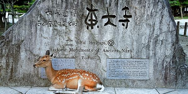 Un ciervo en Nara