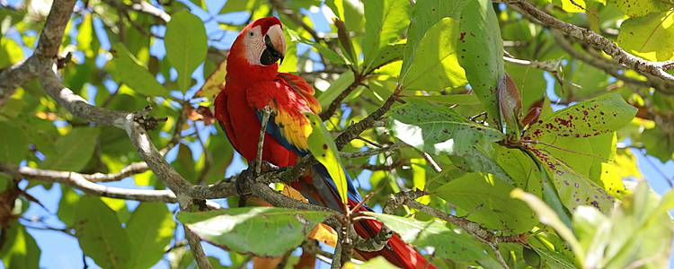 Bird Watching : avvistamento di volatili