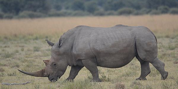 Dans le Khama Rhino Sanctuary
