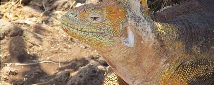 Wunderwelt mit Iguanen und Vulkanen
