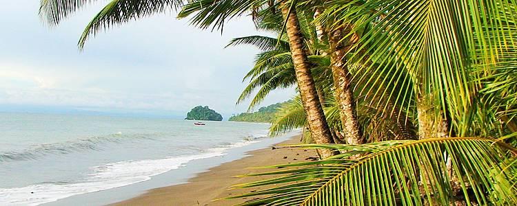 A la découverte du Pacifique