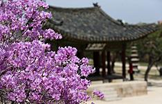 Randonnées, culture et temples