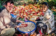 La Route Du Cacao Au Pérou