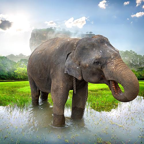 Jusqu'à la côte Est sur la piste des éléphants - Colombo -