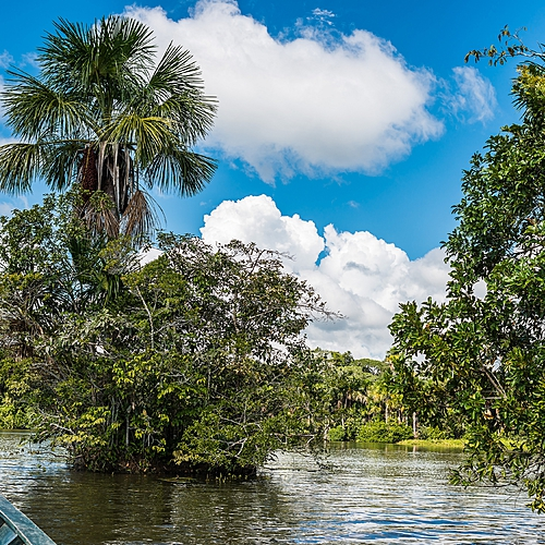 Extension en Forêt Amazonienne - Puerto Maldonado -