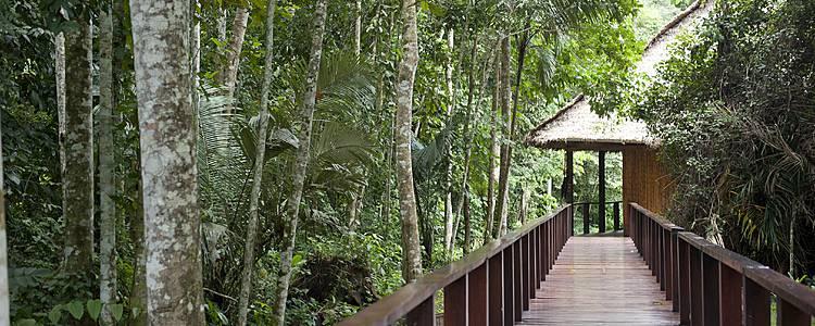 Monde inca et forêt amazonienne