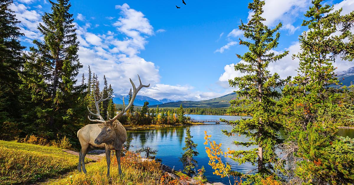 Voyage à pied Canada : Le Grand tour de l\'Ouest