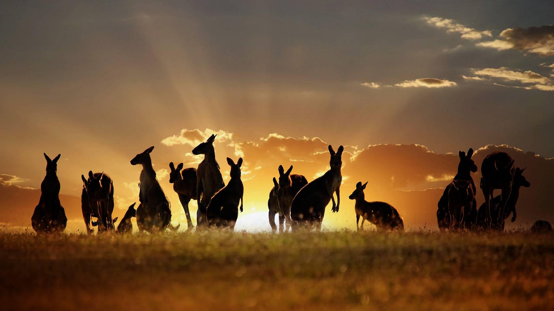 Essentiels d'Australie