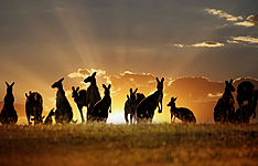 Essentiels d\'Australie