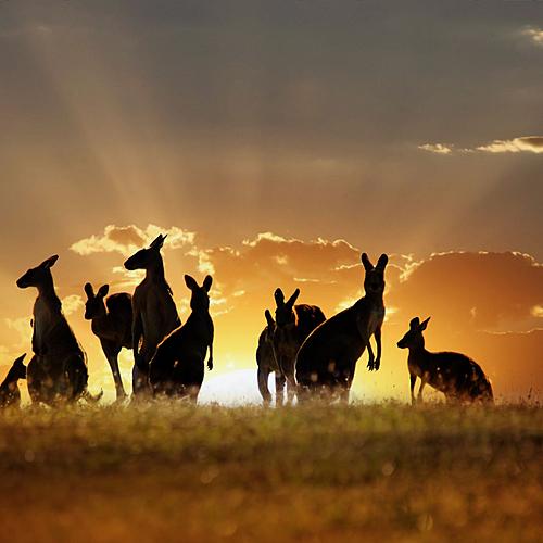Essentiels d'Australie -
