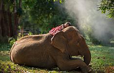 Multiactivités en famille, VTT, éléphants et montgolfière