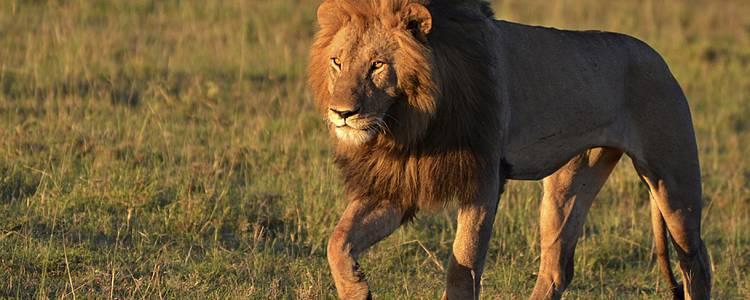Safari Shikamoo