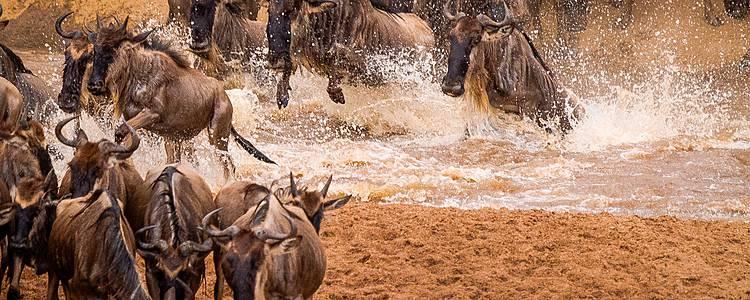 Speciale migrazione nel Sud del Serengeti, dicembre a marzo