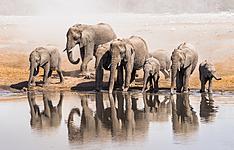Safaris et racines de Namibie, en famille