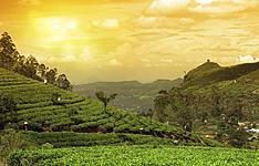 Des plantations du Darjeeling aux réserves sauvages des Sunderbans