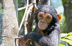Extension sanctuaire des chimpanzés à Mahalé