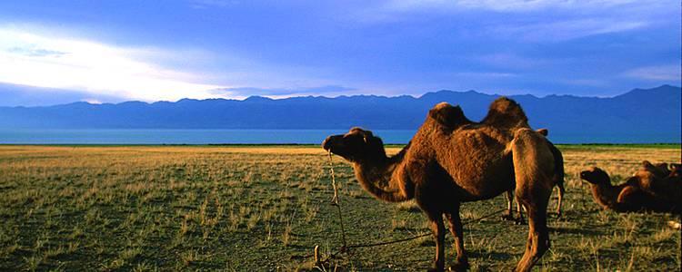 Klassische Rundreise in der zentralen Mongolei