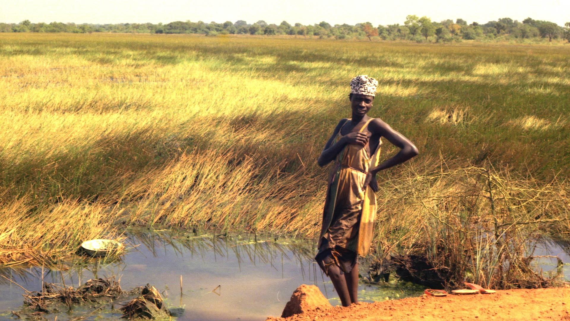 Casamance, rizières et palmeraie
