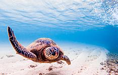 Exploration sur la barrière de corail