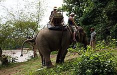 Au pays du million d\'éléphants
