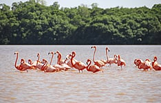 Ecotourisme et rencontres dans le Yucatan