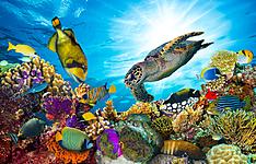 Croisière plongée sur les atolls de Malé, Rasdhoo et Ari