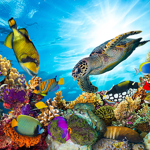 Croisière plongée sur les atolls de Malé, Rasdhoo et Ari -