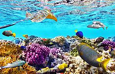 Croisière plongée sur les atolls de Malé et Ari