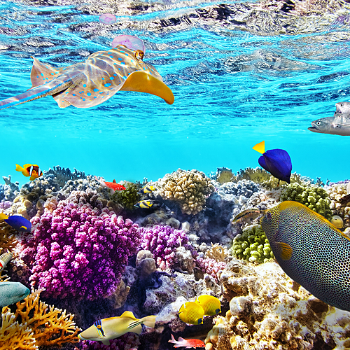 Croisière plongée sur les atolls de Malé et Ari -