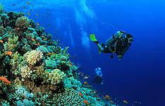 Itouch Blue, Guest house et plongée sous marine