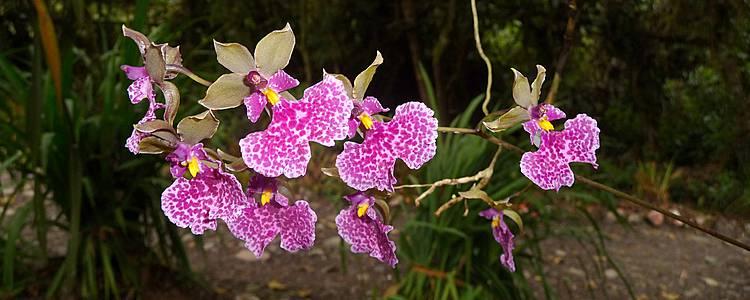 Voyage botanique en Equateur