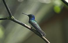 voyage ornithologique néo-tropical
