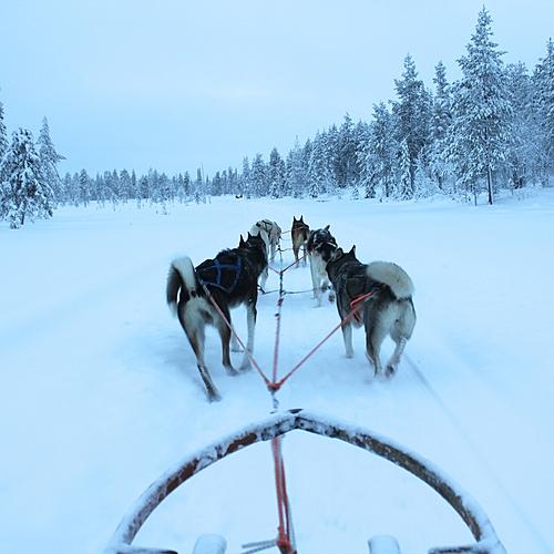 Laponie active en famille - Laponie -