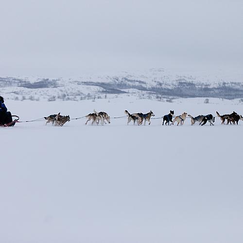 Laponie : Séjour d'exception en chien de traîneau - Kiruna -