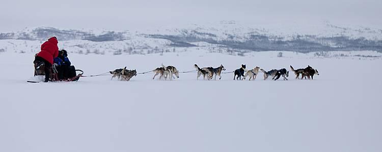 Laponie : Séjour d'exception en chien de traîneau